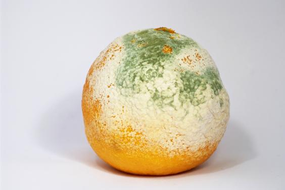 Mouldy_Clementine.jpg