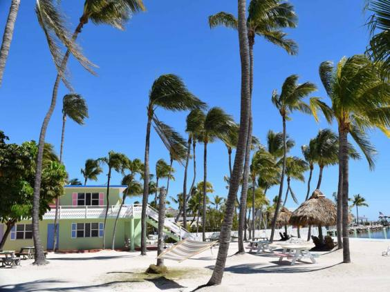 florida-palms.jpg