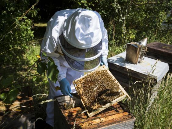 23-Bee-Keeping-AP.jpg