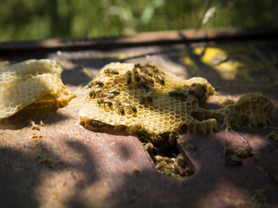23-Honeycomb-AF.jpg