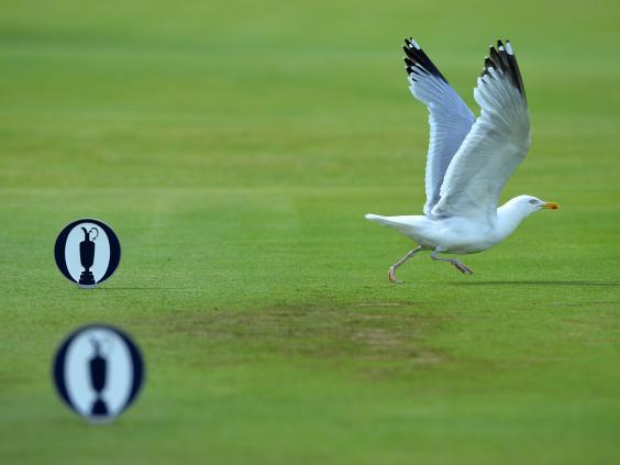 Open-seagull.jpg