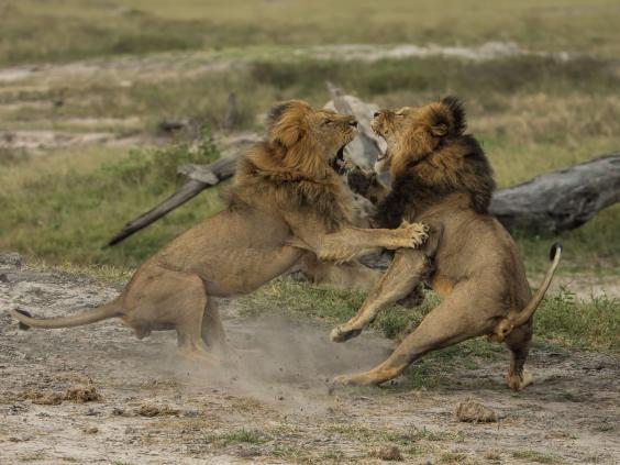 1-Jericho-Lion-Rex.jpg