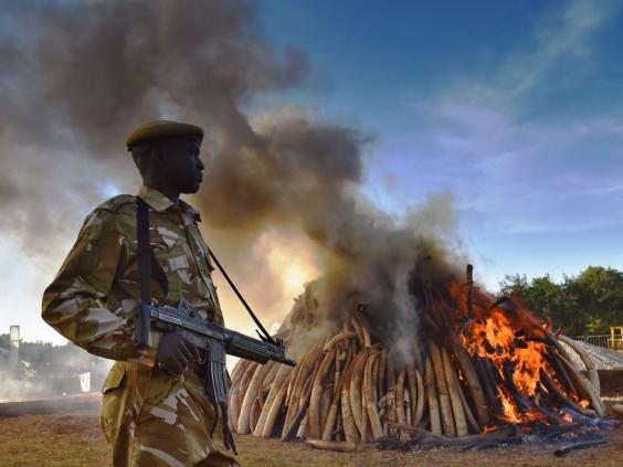 19-Kenya-Ivory-AFPGet.jpg