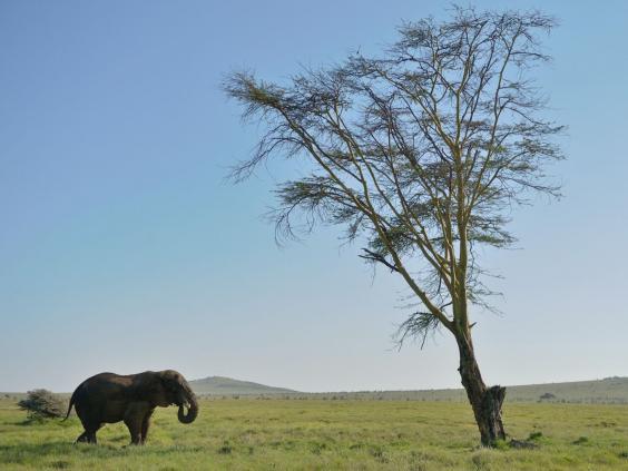 24-Elephant-1-AFPGet.jpg