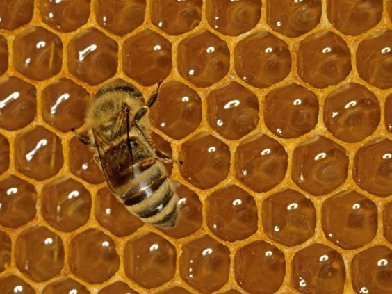 32-Honeycomb-Alamy.jpg