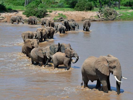 african-elephants-afp-getty.jpg