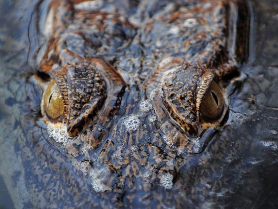 Eyes-3-AFP.jpg