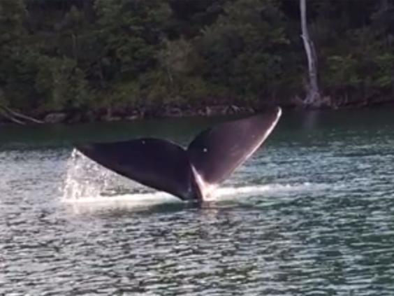 whale-video.jpg