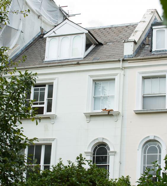 london-fox-johnson-one-use_1.jpg