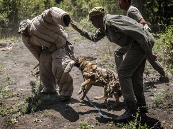 Poachers-AFP.jpg