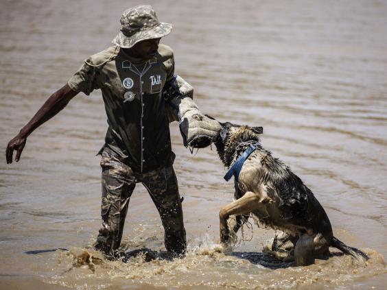 Poachers-AFP_1.jpg