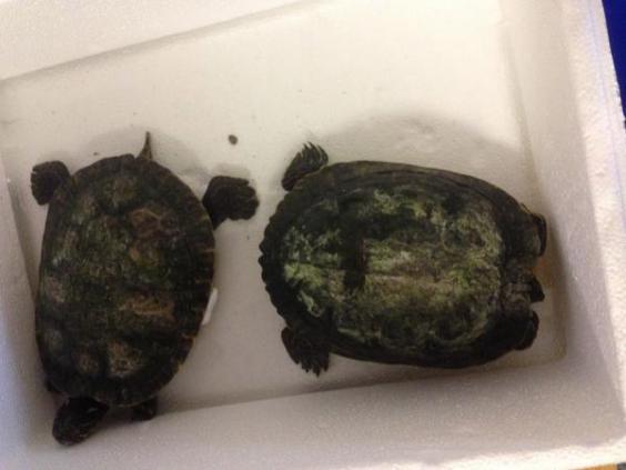 turtles-Redbridge_Council.jpg
