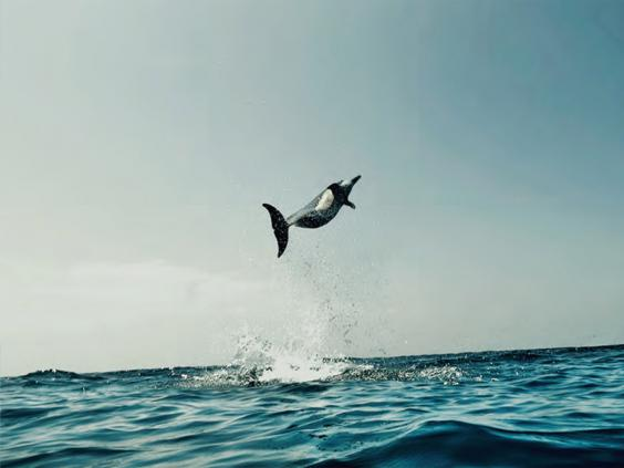 pg-30-dolphins-3.jpg