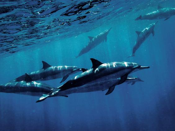 pg-30-dolphins-4.jpg