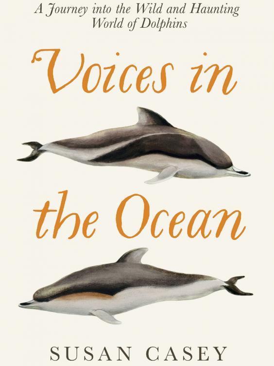 pg-30-dolphins-5.jpg