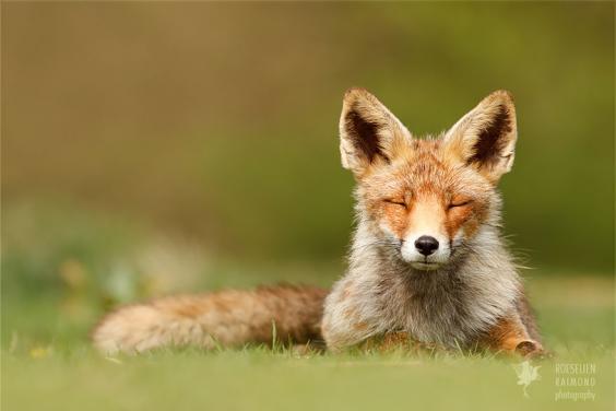 zen-foxes-roeselien-raimond-15__880.jpg
