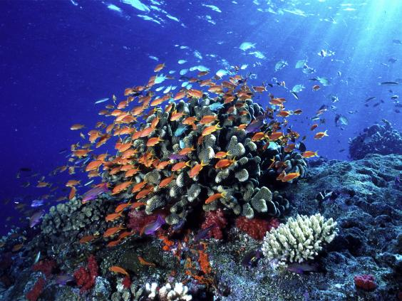 pg-8-marine-wildlife-1-wwf.jpg