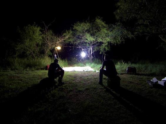 arizona-moth-hunt.jpg