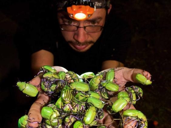 arizona-moths.jpg