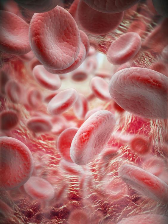 36-Blood-cells-Alamy.jpg