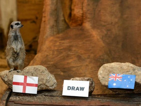 meerkat-australia.jpg