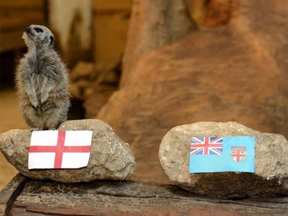 meerkat-fiji.jpg