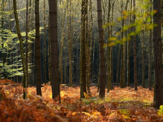 Trees-UK.jpg
