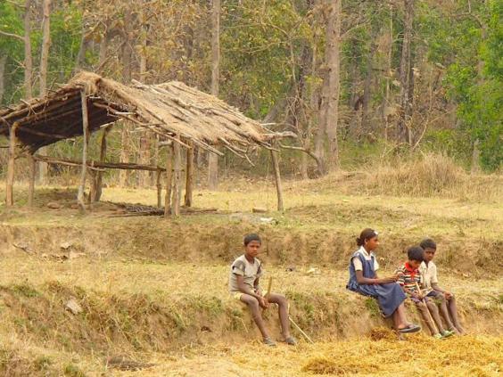 india-sakata-grover.jpg
