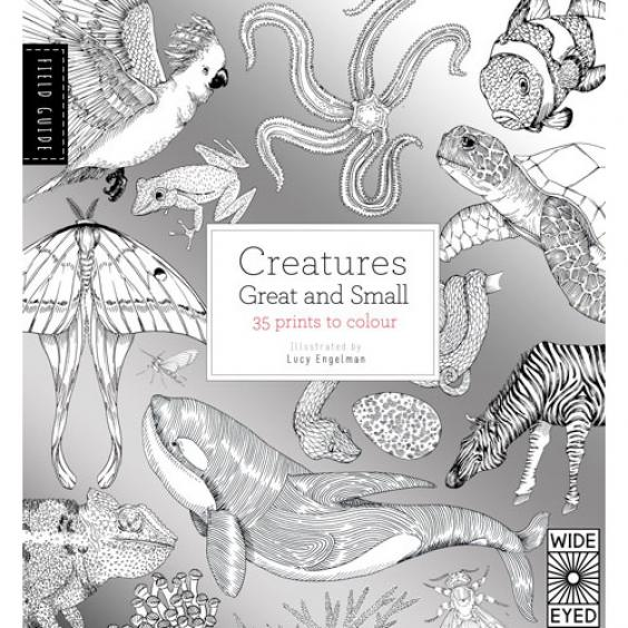 Technically This Is A Colouring Book And Field Guide So As Well 35 Pages Of Animals