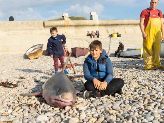 Porbeagle shark caught yards from popular uk beach the for Fishing store portland