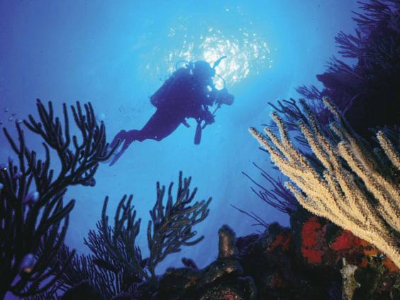 puerto-rico-diving.jpg