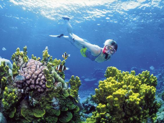 barrier-reef-before.jpg