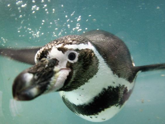 penguin-getty.jpg