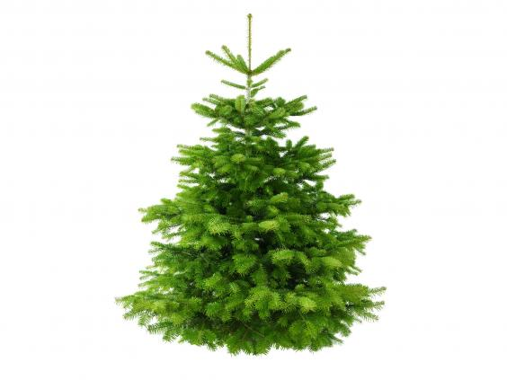 12 Best Real Christmas Trees