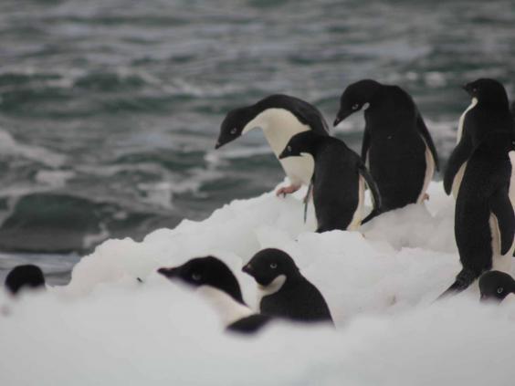 antarctic-penguins.jpg