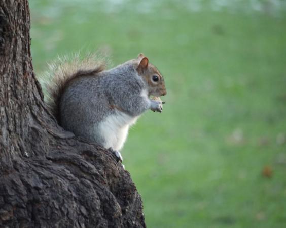 fat-squirrel-2.jpg