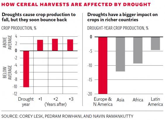 pg-12-cereal-harvests-graphic.jpg