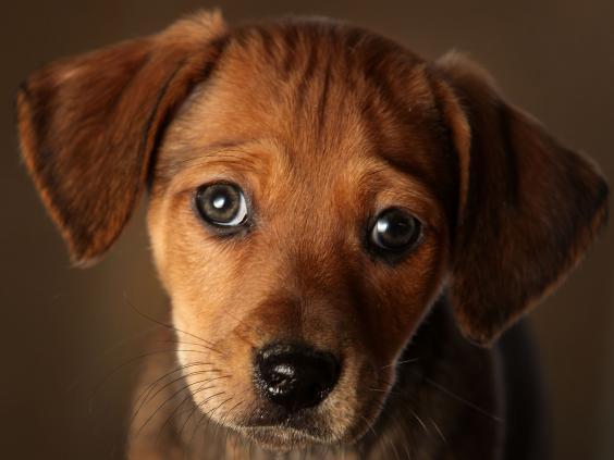 dog-getty.jpg