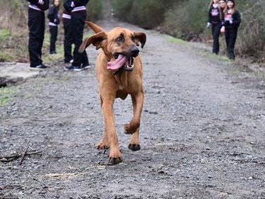marathon-dog-1.jpg