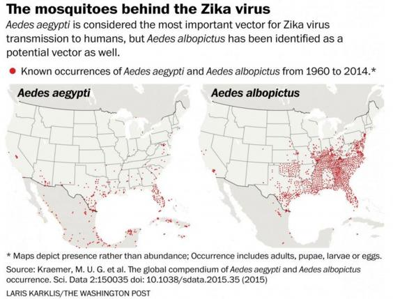 Zika In The US Why America Is So Vulnerable To The Spread Of The - Us zica map
