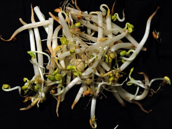 bean-sprouts.jpg