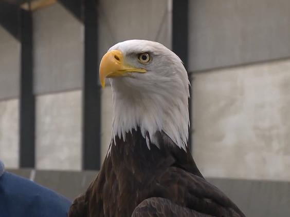 dutch-police-eagle.png
