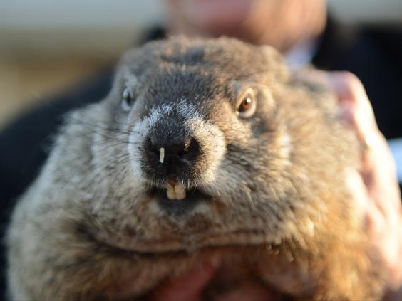 groundhog-reuters.jpg