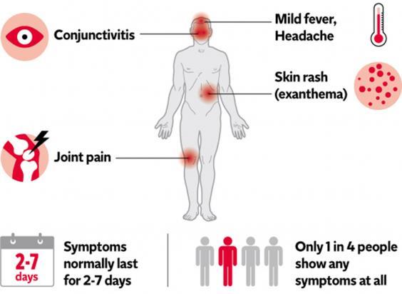 web-zika-1-new-graphic.jpg