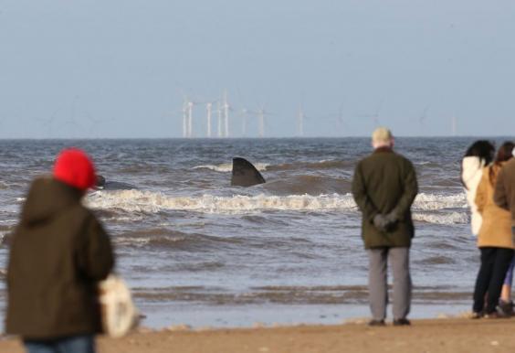 Hunstanton-whale-February2.jpg