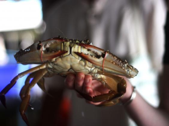 Crab-Thailand.jpg
