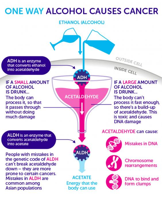 How Does Alcohol Cause Cancer Features Lifestyle