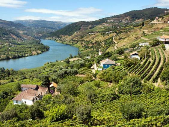 portugal-vineyards-getty.jpg