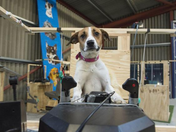 5-dogs-might-fly-1-OxfordScientificFilmsLtd.jpg