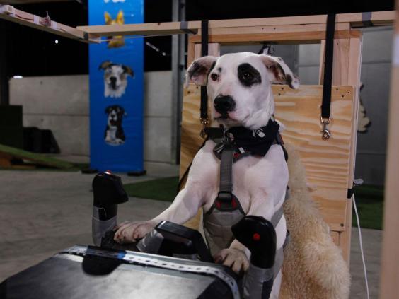 5-dogs-might-fly-2-OxfordScientificFilmsLtd.jpg